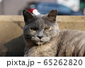 ふてぶてしい野良猫 65262820