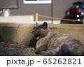 あくびをする野良猫 65262821
