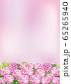 紫陽花(ピンク2) 65265940