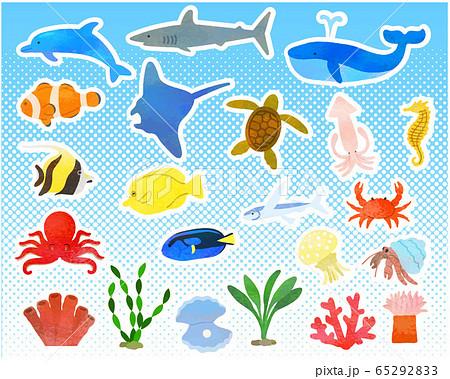様々な海の生き物セット/ベクター 65292833