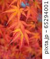 Topic autumn, colourful leafs 65294001