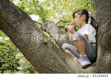 木の上でシャボン玉で遊ぶ幼児(5歳児) 65294694