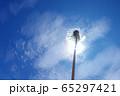 青空を背景にしたタンポポの綿毛 65297421