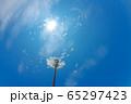 青空を背景にしたタンポポの綿毛 65297423