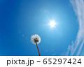 青空を背景にしたタンポポの綿毛 65297424