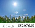 青空を背景にした小麦畑 65297685