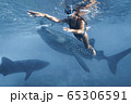Woman is snorkeling with whale sharks in deep blue ocean 65306591