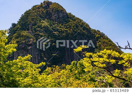 青空と新緑が美しい西部林道の森、世界自然遺産屋久島(4月) 65313489
