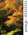 赤目四十八滝の秋 65332552