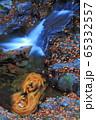 赤目四十八滝の秋 65332557