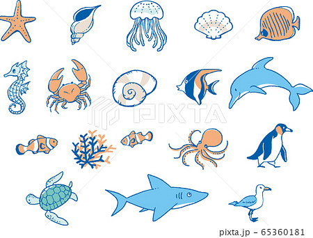 海の生物イラスト 65360181