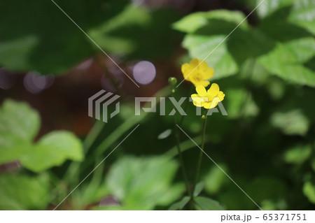 緑の葉が背景の黄色い花(コピースペースあり) 65371751
