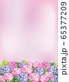 紫陽花(ピンクと紫) 65377209