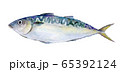 水彩イラスト 魚介 魚 海鮮 鯖 65392124
