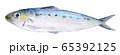 水彩イラスト 魚介 魚 海鮮 イワシ 65392125