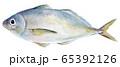 水彩イラスト 魚介 魚 海鮮 アジ 65392126