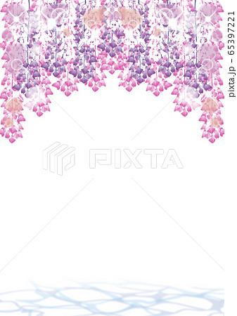 藤の花 藤 65397221
