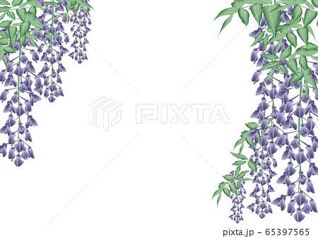 藤 藤の花 65397565