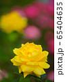 黄色いバラ 65404635