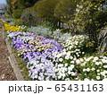 稲城中央公園の花壇 65431163