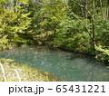 長池公園 トンボ池(八王子市) 65431221