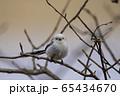 白い妖精 シマエナガ 65434670