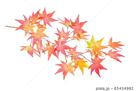 赤く色づいた秋の紅葉の枝。水彩イラストのトレースベクター 65434992