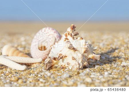 貝殻と砂浜 65436480