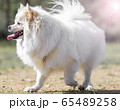 犬 子犬 動物 65489258