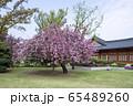 春 花 公園 65489260