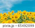 向日葵 65492099