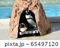 志摩マリンランド ペンギン 65497120
