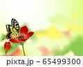 アゲハ蝶 蝶 アネモネ 65499300