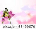 アゲハ蝶 蝶 アネモネ ピンク 65499670