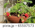 家庭菜園のイチゴ 65507573