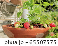 家庭菜園のイチゴ 65507575