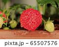 家庭菜園のイチゴ 65507576