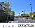 世田谷・赤松通りのハナミズキの街路樹 65507580