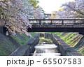 善福寺川緑地の相生橋の桜風景 65507583