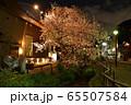 北沢川緑道の夜桜 65507584