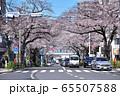 中野・新井五差路の桜並木 65507588