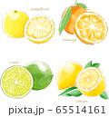 citrus_fruit_watercolor 65514161