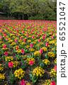 大宮花の丘農林公苑 春  花壇 さいたま市 65521047