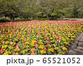 大宮花の丘農林公苑 春  花壇 さいたま市 65521052