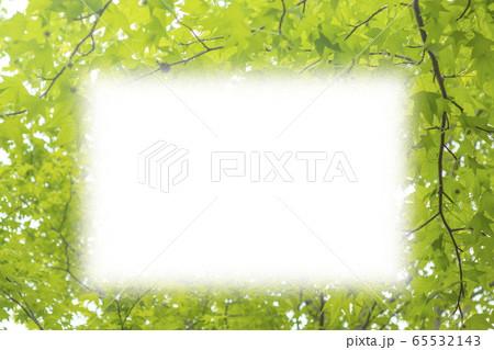 新緑イメージ_青モミジのフレーム 65532143