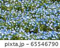 大宮花の丘農林公苑 春  ネモヒラ さいたま市 65546790