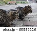 野良猫 65552226
