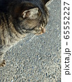 じっと見つめるトラ猫を上から眺める 65552227