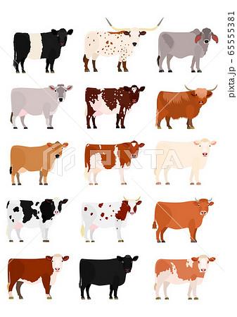 いろいろな牛の一覧のイラスト素材 [65555381] - PIXTA