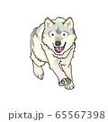 オオカミ 65567398